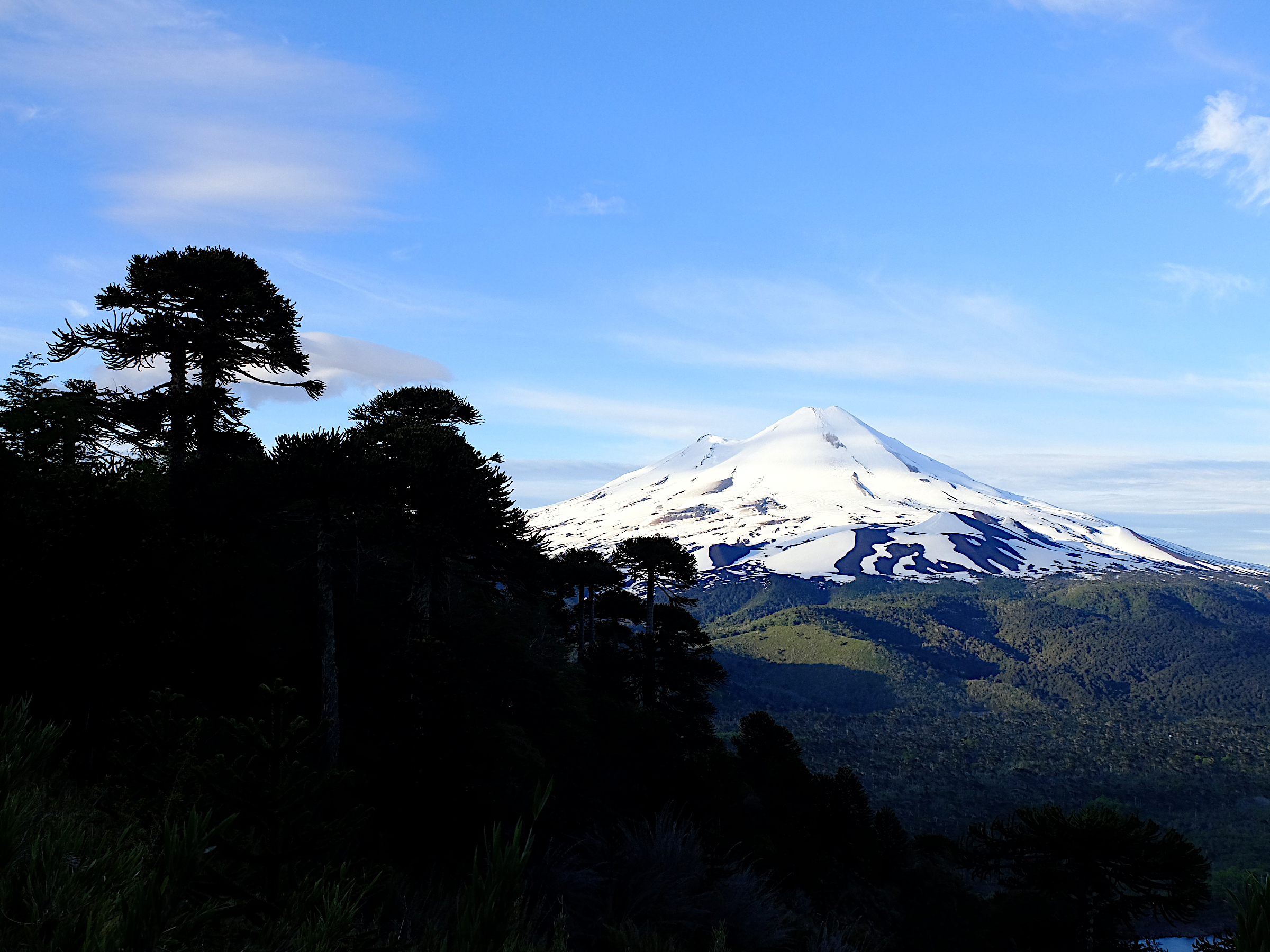 Andean volcano climbing and Monkey Puzzle forests